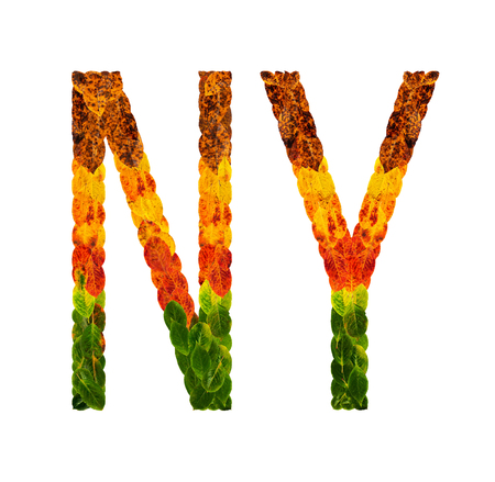NY word is written with leaves white isolated background, banner for printing, creative illustration ny colored leaves. Stock Photo