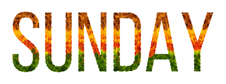 sunday word is written with leaves white isolated background, banner for printing, creative illustration for calendar colored leaves.