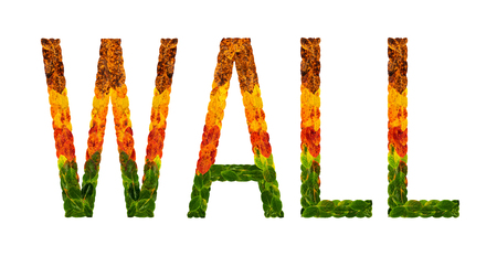 wall word is written with leaves white isolated background, banner for printing, creative illustration wall colored leaves.