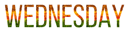 wednesday word is written with leaves white isolated background, banner for calendar printing, creative illustration wednesday colored leaves.