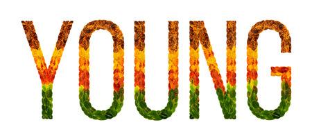 젊은 단어는 잎으로 작성 된 흰색 격리 된 배경, 인쇄, 창조적 인 그림에 대 한 배너 젊은 색깔의 단풍.