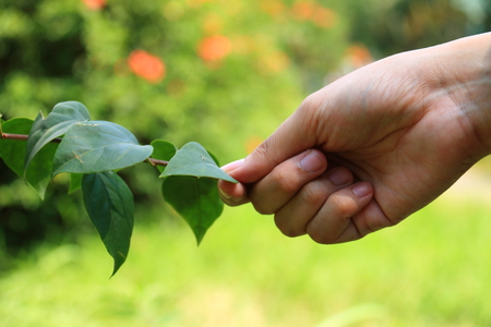 supposed: Humans supposed to befriend with nature, and this handshaking picture represents the actualization
