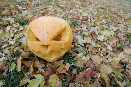 halloween pumpkin in autumn leaves in park photo
