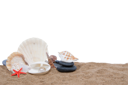 in the sand: Sea shells on the sand, isolated