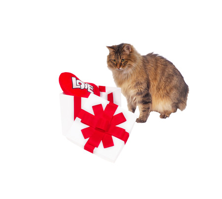 s shape: Cat about white gift with red heart. Stock Photo