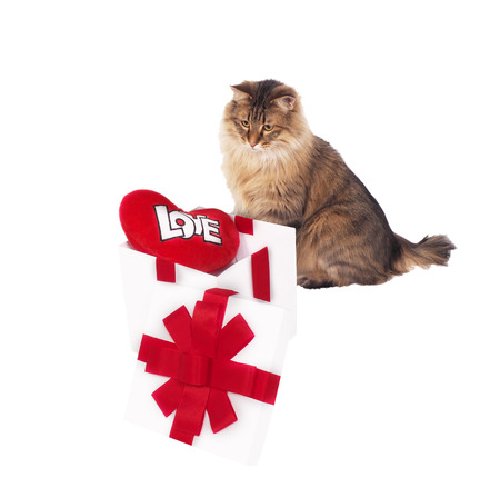 valentine s card: Cat about white gift with red heart. Stock Photo