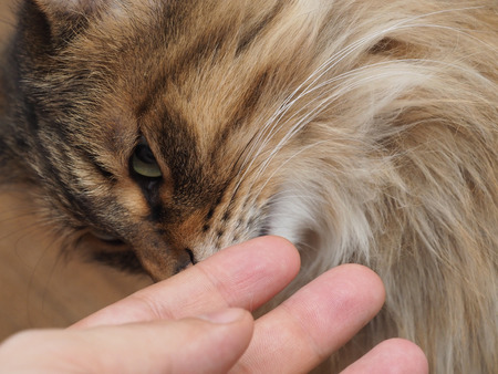 caresses: Mans hand stroking pretty contented cat. concept. Stock Photo