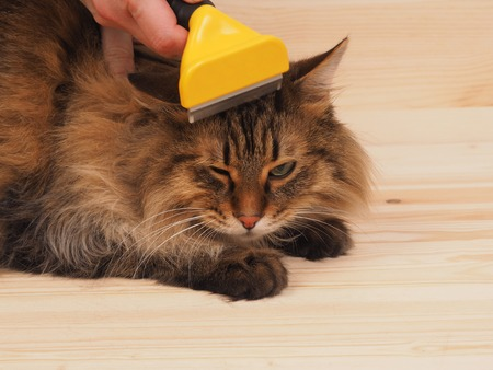 combing: combing brush and cat  on the wood  background.