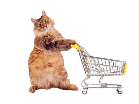 The big shaggy cat with shopping cart isolated on white..number 9. Stock Photo