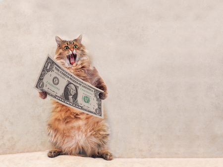 The big shaggy cat is very funny standing.shelter 4 Stock Photo