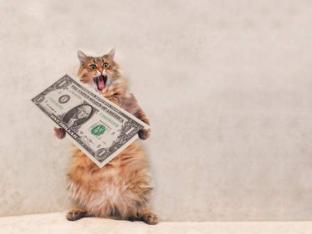 The big shaggy cat is very funny standing.shelter 7 Stock Photo