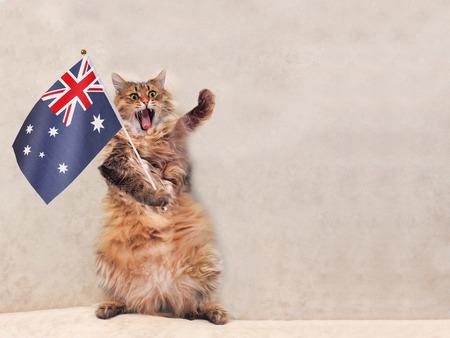 큰 털 복 숭이 고양이는 매우 우스운 standing.flag. 오스트 레일 리아 스톡 콘텐츠
