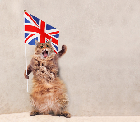 The big shaggy cat is holding the Great Britain flag . Фото со стока