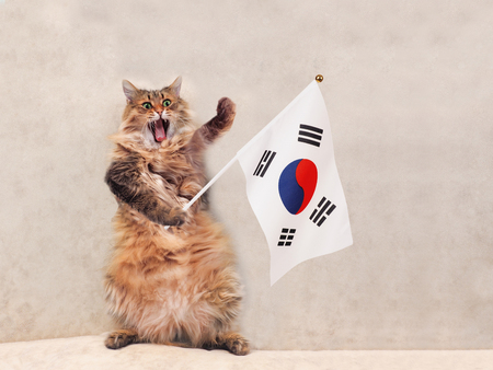 korea flag: The big shaggy cat is very funny standing.flag . Stock Photo