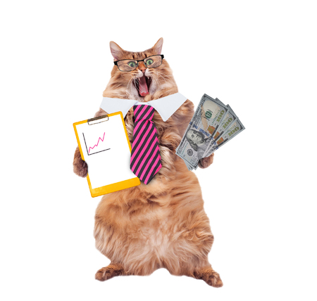 funny cat with glasses and tie. the concept of financier.