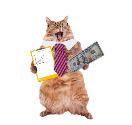 摘要: funny cat with glasses and tie. the concept of financier.
