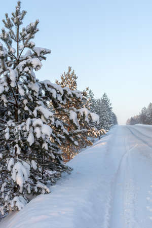 trees in the snow along the road. winter landscape. Vertical photo. Frozen, snowy nature. Dogrog in the snow.