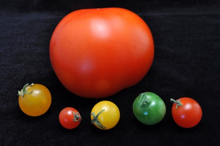 differ: Small tomatoes on the background of a large