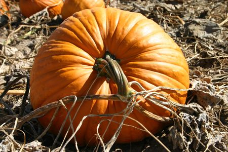 Pumpkin and flower photo