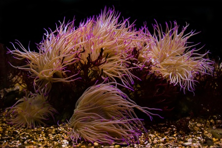Pink corals Stock Photo
