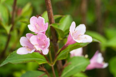 Idyllic Summer Meadow wildflowers Rhododendron Stock Photo