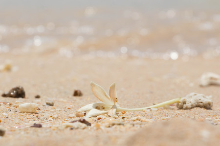 White Jasmine Flower on the sand by the sea 스톡 콘텐츠