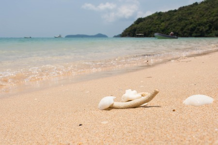 Sea shells and coral with sand as background
