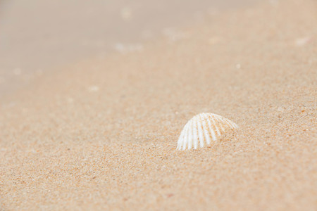 White shells and coral in the sand on the seashore 스톡 콘텐츠