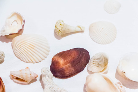 Seashell and coral collection on white background