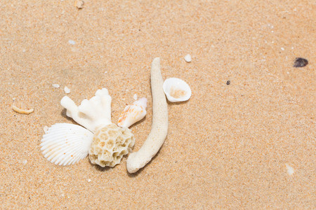 White shells and coral in the sand on the seashore 写真素材