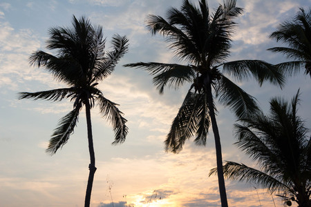 Palm silhouette on the background of a dawn or Sunrise sky 写真素材