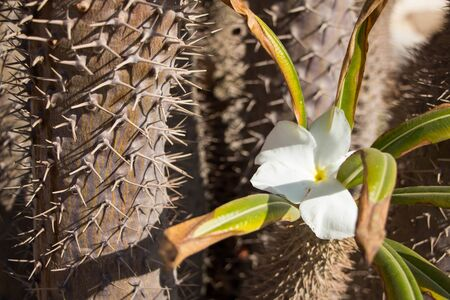 Close up view of a beautiful cactus plant with spikes and nice plumeria