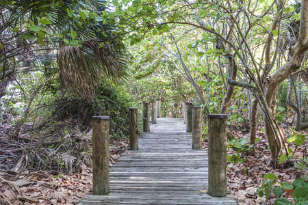 foot path: Foot path through the Everglades National Park