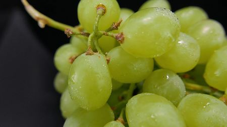 Camera slides over a bunch of grapes