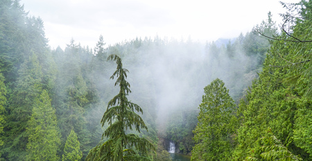 Green trees in the mist - mystical woods in Canada CANADA Stock Photo