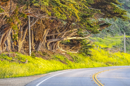 Street view with wild vegetation at Big Sur California