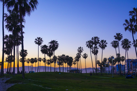 Venice Beach after sunset - silhouettes of Palm Trees Stock Photo