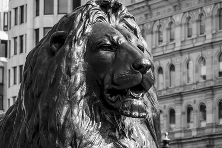 The famous lions at Trafalgar Square in London