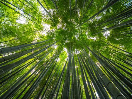 Bamboo Forest in Japan - a wonderful place for recreation Foto de archivo