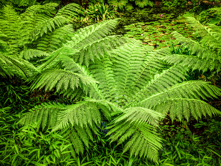 Green fern leaves in a close up shot Stock Photo