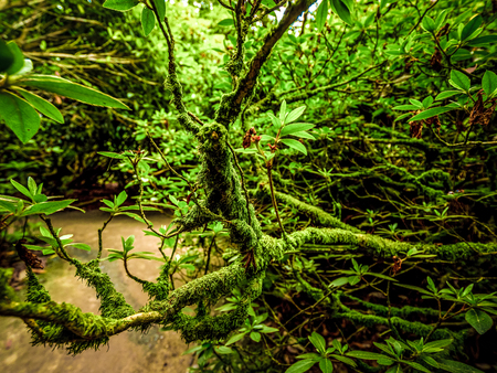 Amazing vegetation in a jungle forest