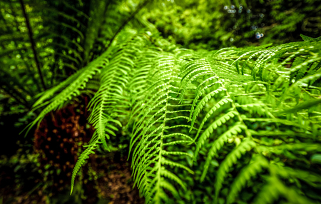 Deep green fern - amazing nature
