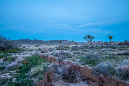 The desert of Nevada in the evening