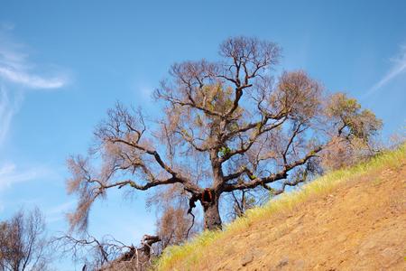 Malibu Creek State Park in Kalifornien Standard-Bild