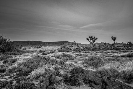Die Wüste von Nevada am Abend Standard-Bild