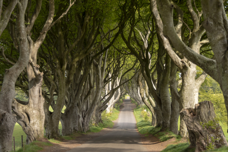 The Dark Hedges - a famous location in Northern Ireland - travel photography