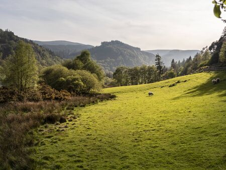 Amazing green Irish grasslands in the Wicklow Mountains