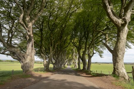 The Dark Hedges - a famous location in Northern Ireland Stock fotó