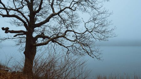 Myterious trees and a crucifix in the mist - creepy scary picture Banque d'images