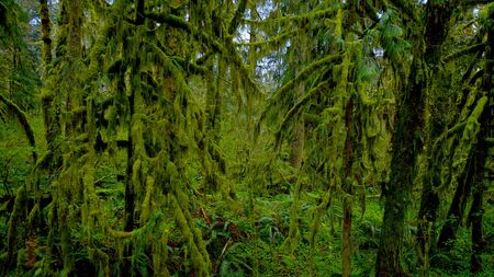 Rain Forest near Forks - awesome nature - travel photography